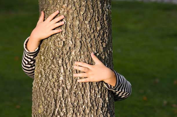 Cosa c'entrano gli alberi con l'aborto e i diritti civili?