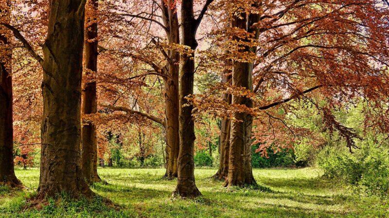 Quattro alberi per ogni europeo, entro il 2030